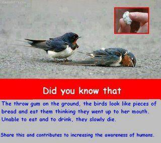 save birds, dont throw chewing gums on roads, rimple, rimple.in,